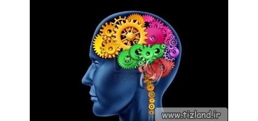 بهترین زمان عملکرد مغز