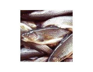 خرید بانک اطلاعات خرده فروشی مرغ و ماهی