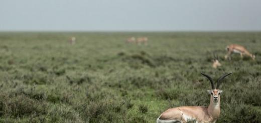 نخستین آمار برداری علمی از حیات وحش کشور