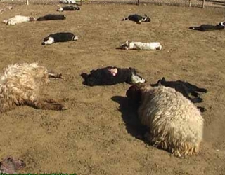 حمله گرگ گرسنه به روستای چاه گَزی