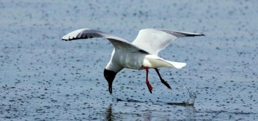 تصاویر پرندگان حاشیه تالاب میقان اراک