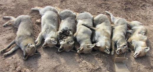کشتار بی شرمانه هفت روباه