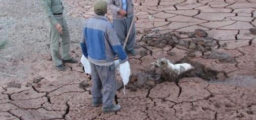 نجات جان سگ با تلاش محیط بانان و باغداران گرمسار