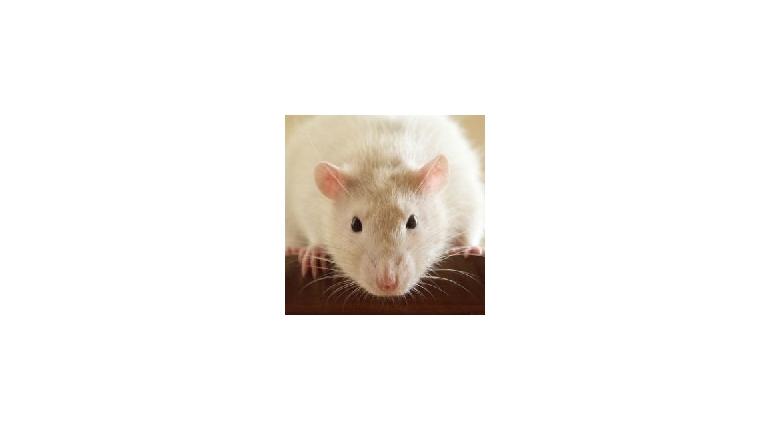 حکایت انگلیسی The Little Mouse با فایل صوتی