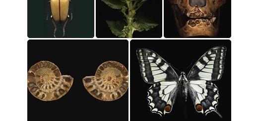 دانلود مجموعه تصاویر با کیفیت ریخت شناسی (زیست شناسی)، شکل ظاهری اندام جانداران