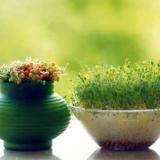 آموزش کاربردی کاشت سبزه عید