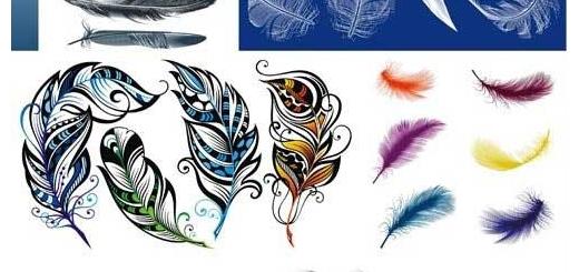 دانلود وکتور پر انواع پرنده