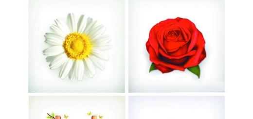دانلود تصاویر وکتور اشیاء و عناصر طبیعی متنوع