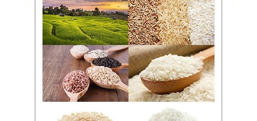 دانلود تصاویر با کیفیت برنج خام و پخته
