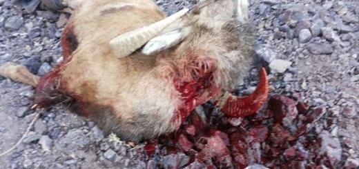 رئیس اداره محیط زیست بردسیر در درگیری با شکارچیان مجروح شد
