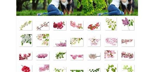 دانلود 50 کلیپ آرت گل و بوته و شکوفه های بدون بک گراند