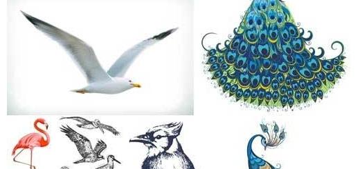 دانلود مجموعه وکتور انواع پرنده