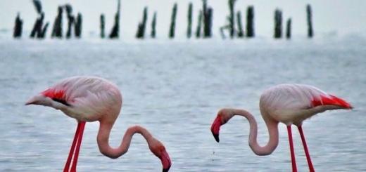تصاویری از حیات وحش جزیره آشورده