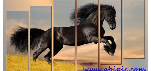 دانلود سورس لایه باز تصویر چند تکه ای اسب