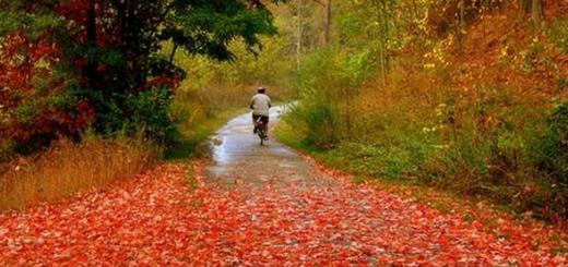 پاییز و درد تنهایی