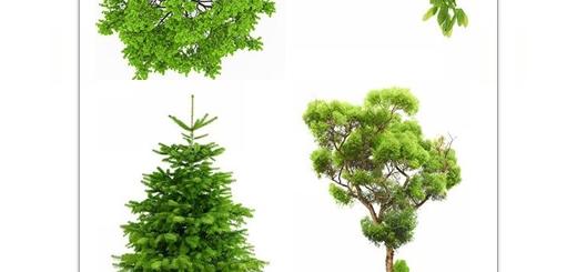 دانلود تصاویر با کیفیت درختان متنوع در پس زمینه شفاف