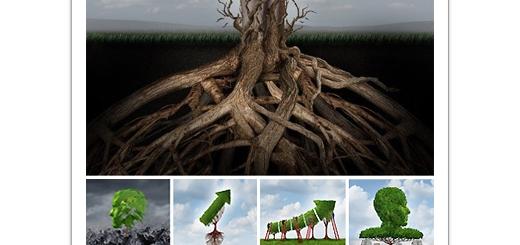 دانلود تصاویر مفهومی درختان خلاقانه