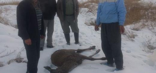گوزن فراری از باغ وحش ارومیه توسط شکارچیان کشته شد