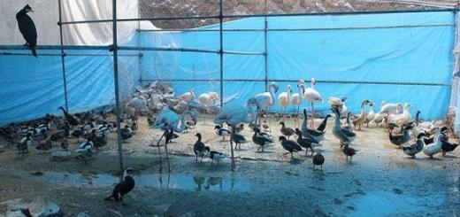 کشف باغ پرندگان شخصی در شاندیز مشهد