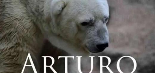 در ۵۰۰۰۰۰ امضا برای نجات آرتورو شریک شوید!