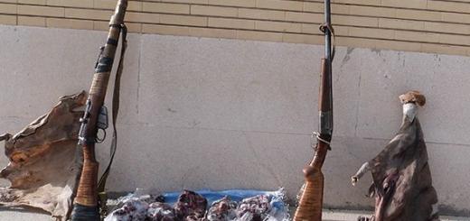 عامل کشتار یک راس جبیر و یک قوچ وحشی دستگیر شد