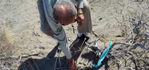 جمع آوری 20 کیلومتر دام در سیستان و بلوچستان