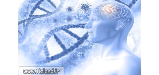 آیا مغز های بزرگ باهوش ترند؟