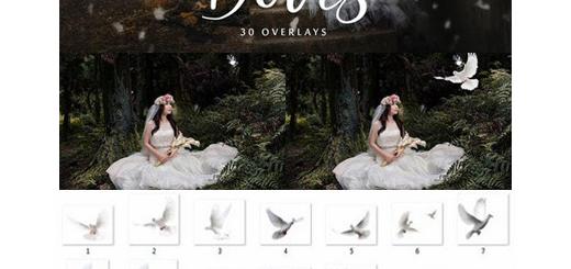 دانلود 20 کلیپ آرت پرنده بدون بک گراند