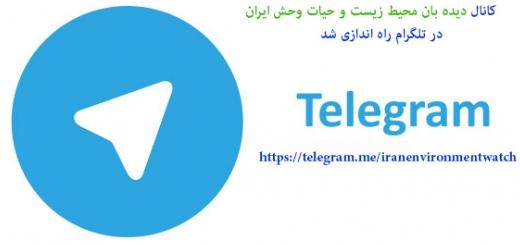 دیده بان محیط زیست و حیاط وحش ایران در تلگرام