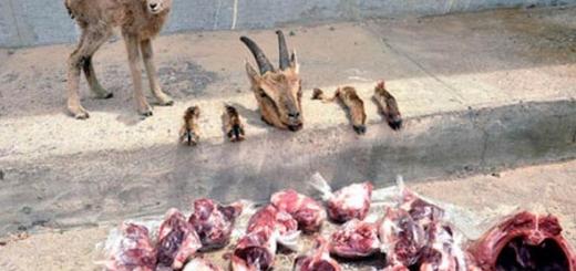 بی اخلاقی شنیع یک شکارچی