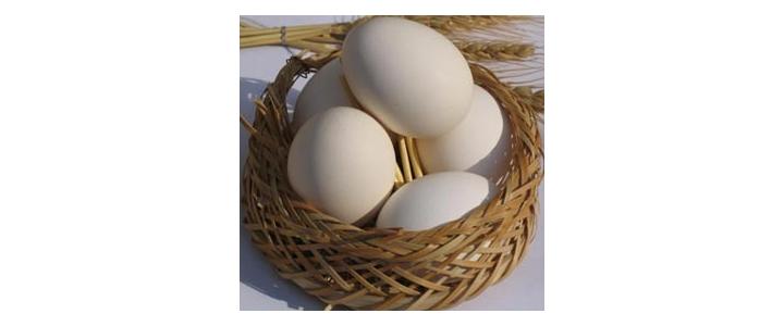 کاربردهای جالب پوست تخم مرغ که نمی دانستید