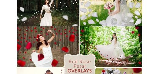 دانلود اکشن فتوشاپ ایجاد گلبرگ رز قرمز و سفید بر روی تصاویر
