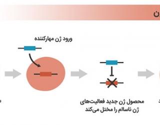 پاورپوینت ژن درمانی از پزشکی سنتی تا پزشکی نوین