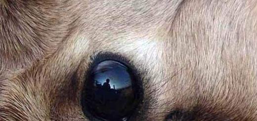 شکار در حال مرگ، شکارچی را به گریه انداخت
