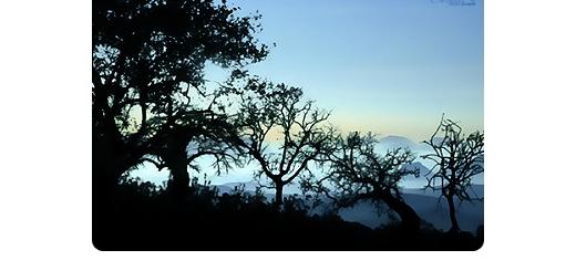 مجموعه ای از براش درختان