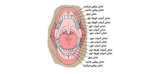 فیلم آموزش پروتزهای دندانی - مجموعه نرم افزارهای آموزشی پزشکی