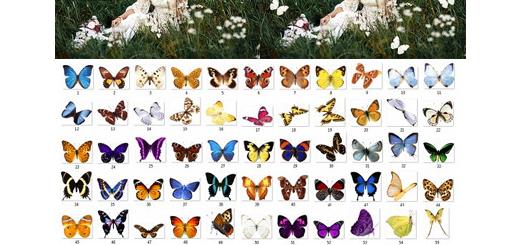 دانلود 100 کلیپ آرت پروانه های رنگی بدون بک گراند