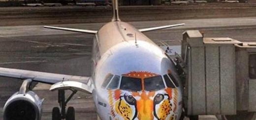 ایده ستودنی هواپیمایی معراج و همکاری انجمن یوزپلنگ ایرانی/ تصویری