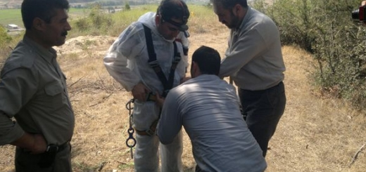 فداکاری  دامپزشک و نجات شغال آسیب دیده از عمق چاه