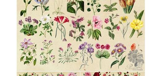 دانلود مجموعه عناصر طراحی گل و بوته های آنتیک متنوع