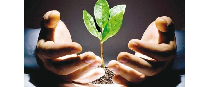 تشریح کامل داراییهای زیستی مولد(استاندارد۲۶)