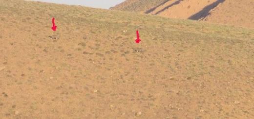 مشاهده دو پلنگ ایرانی در پارک ملی ساریگل