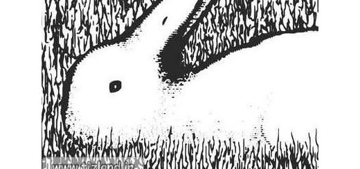 خطای دید خرگوش یا مرغابی