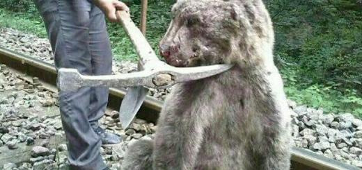 مرگ خرس قهوه ای بر اثر برخورد با قطار