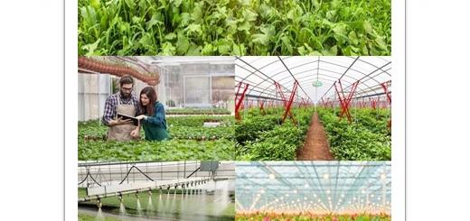 دانلود تصاویر با کیفیت خانه سبز، گلخانه