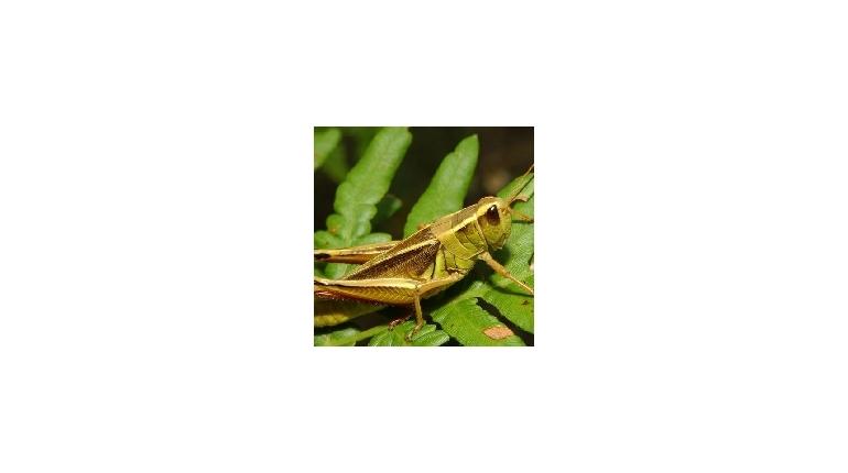 حکایت انگلیسی The Grasshopper and the Ants با فایل صوتی