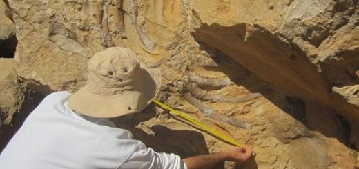 فسیل ۲۰ میلیون ساله بردکژدم