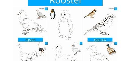 دانلود تصاویر وکتور قالب های آموزشی طراحی و رسم پرندگان با نقاط