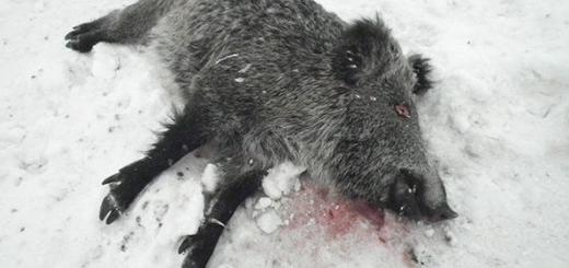 عامل کشتار پنج گراز وحشی در شهرستان سردشت دستگیر شد