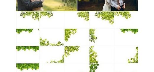 دانلود مجموعه تصاویر کلیپ آرت افکت شاخ و برگ متنوع